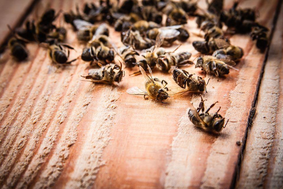 Les successeurs aux néonicotinoïdes sont tout aussi nocifs pour les abeilles. stefano Fotolia [stefano - Fotolia]