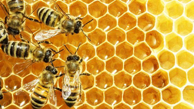 Des abeilles dans leur rucher. [Dmytro Smaglov - Fotolia]