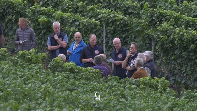 La Fête des Vignerons à Vevey, c'est dans dix mois. Les 300 hectares de vigne de la Confrérie viennent d'être expertisés. [RTS]