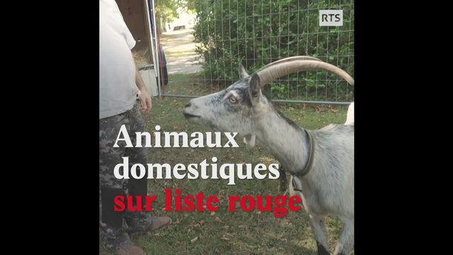 Les animaux, c'est aussi notre patrimoine [RTS]