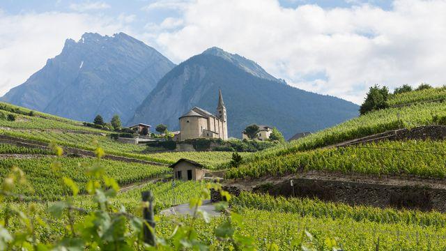 Des vignobles en terrasse dans la région de Sion. [Dominic Steinmann - Keystone]