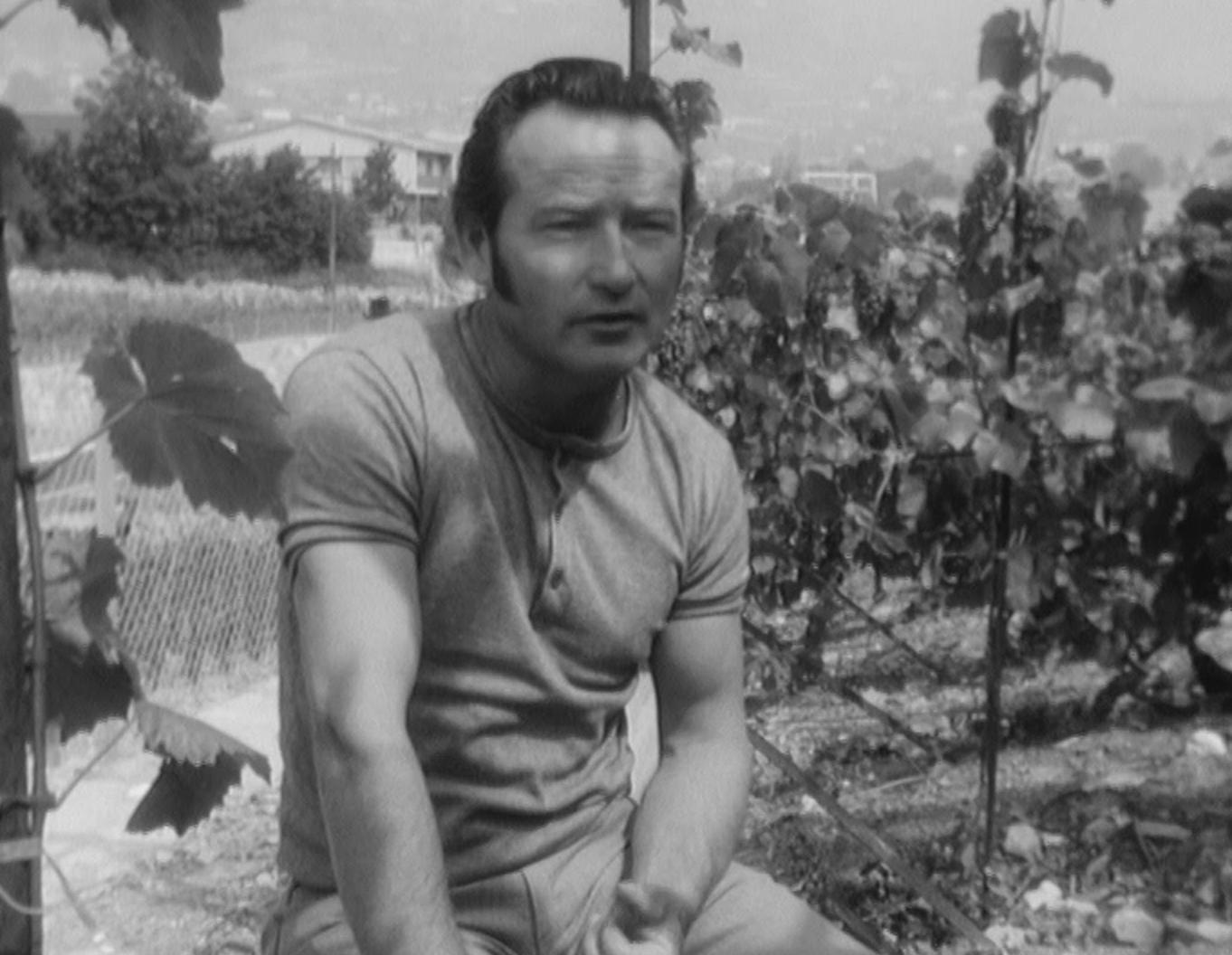 Sagesse vigneronne