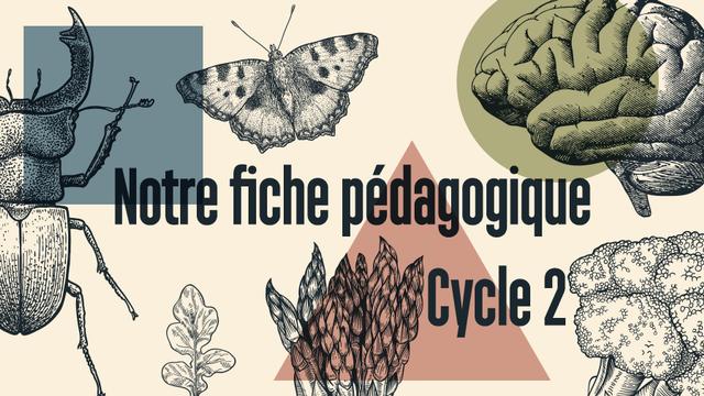 Fiche pédagogique RTS Découverte Cycle 2. [RTS]