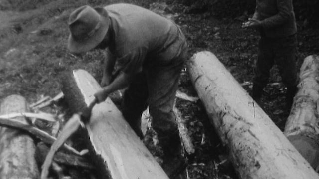 L'exploitation du bois [RTS]