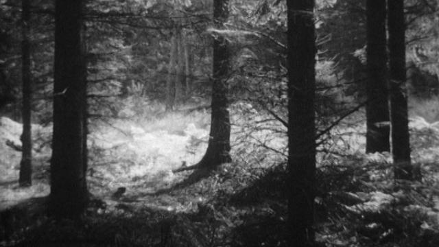Promenons-nous dans les bois [RTS]