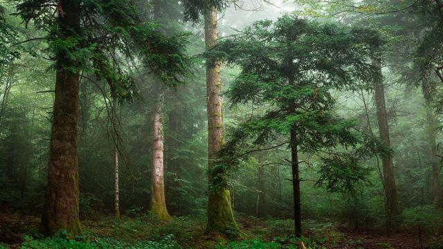 """""""Des forêts et des hommes"""", une semaine thématique de la RTS. [Olivier Tabary - Fotolia]"""