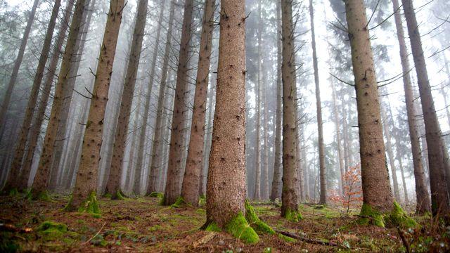 L'esprit de la forêt [Philippe Christin  - RTS ]