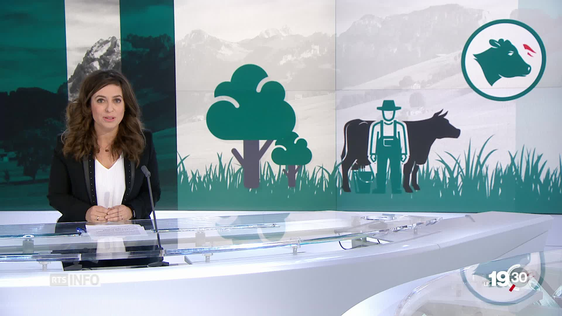 "Cynthia Gani: explications initiative ""Pour des vaches à cornes"""