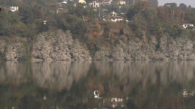 Les riverains du lac de Muzzano au Tessin se plaignent de la présence de cormorans [RTS]