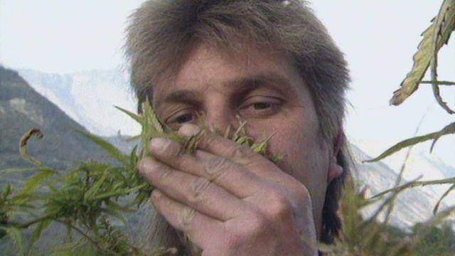 Bernard Rappaz, cultivateur de chanvre. [RTS]