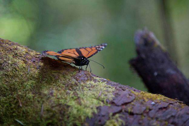 40% des insectes risquent l'extinction, menaçant l'équilibre écologique