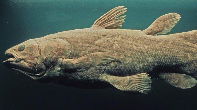 Le coelacanthe [PIXATERRA - Fotolia]