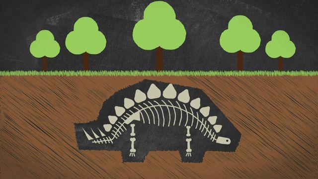 Jurassica - Ne retrouve-t-on vraiment que les squelettes des animaux fossilisés? [RTS]