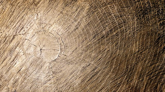 La dendrochronologie permet de dater une pièce de bois à l'année près. Tricia Fotolia [Tricia - Fotolia]