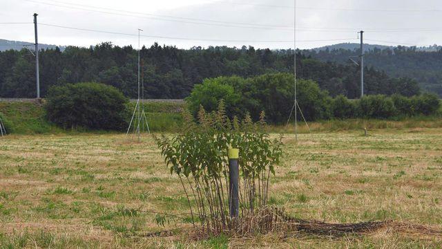 Le projet de forage géothermique près de Delémont fait débat depuis plusieurs années. [Gaël Klein - RTS]