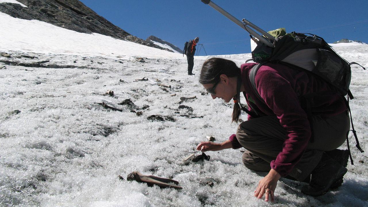 Un prélèvement d'ossements de mulets sur le glacier du Théodule à Zermatt. [Sophie Providoli - Musée d'histoire du Valais]