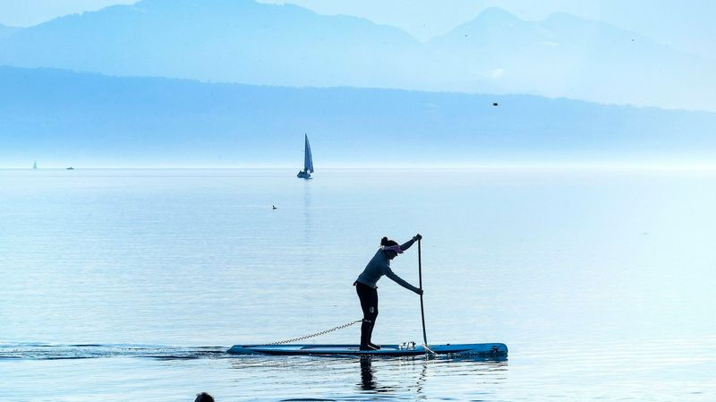 8f36296ff2278c La pratique du paddle dérange les oiseaux même à grande distance ...