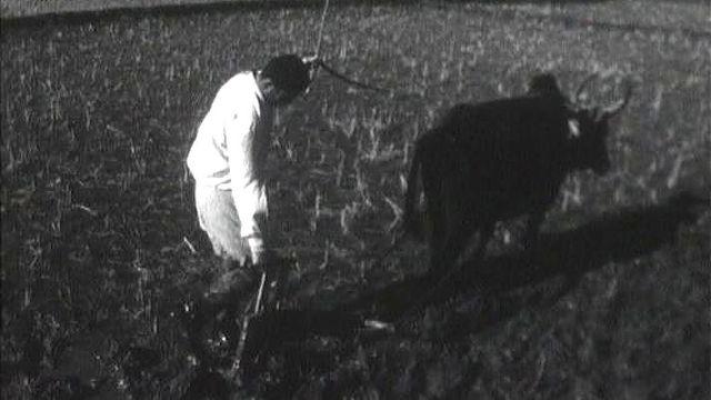 Réforme agraire en Iran en 1963. [RTS]