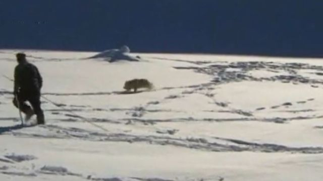 Chien d'avalanche et son maître en 2002. [RTS]