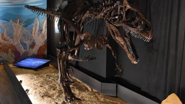 Un squelette exceptionnel d'allosaure au Jurassica Museum à Porrentruy. [Gaël Klein - RTS]