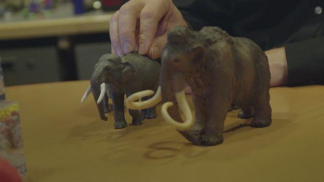 Génétique : pourquoi ressusciter des mammouths ? [RTS]
