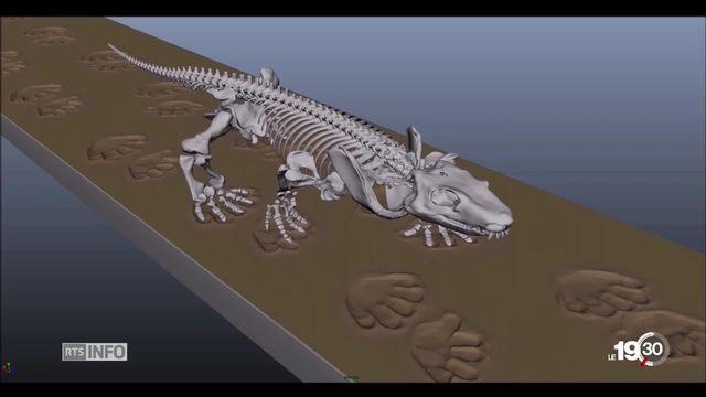 Grâce à des robots de l'Epfl, on a reconstitué la démarch d'animux vieux de 300 millions d'années [RTS]