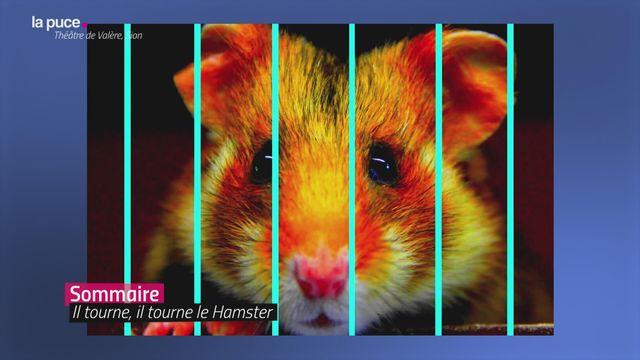 Des hamsters et des hommes [RTS]
