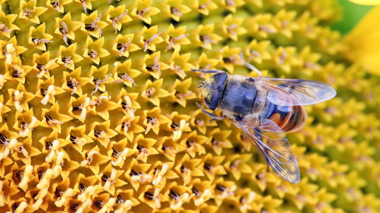 Les abeilles font parties des insectes menacés d'extinction. [Arnd Wiegmann - REUTERS]