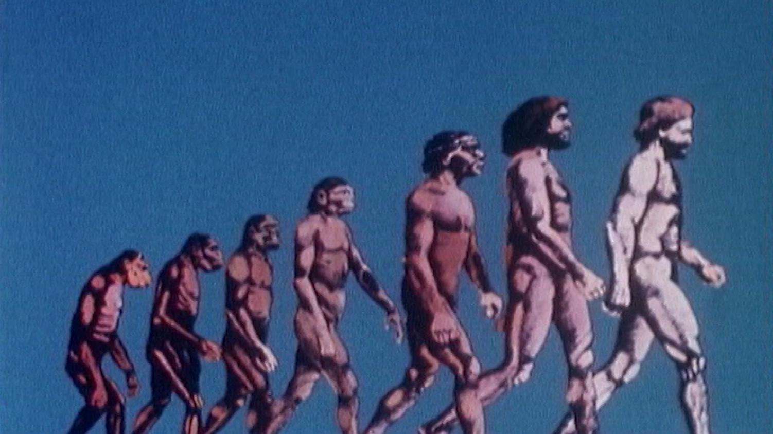 Les créationnistes contre Darwin