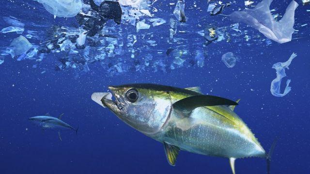 Le plastique se répand jusque dans les profondeurs des océans. [Biosphoto / Paulo de Oliveira  - afp]