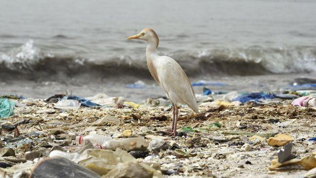 Le WWF tire la sonnette d'alarme sur la pollution plastique. [Seyllou - AFP]