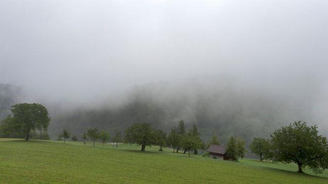 Quelques arbres à Grindel, dans le canton de Soleure. [Georgios Kefalas - Keystone]