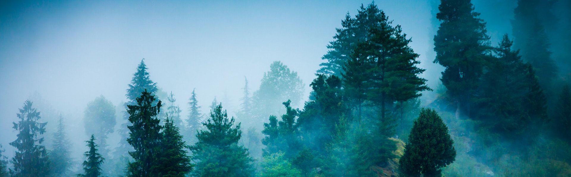 Les forêts recouvrent 33% du territoire suisse. [Cookelma - Depositphotos]