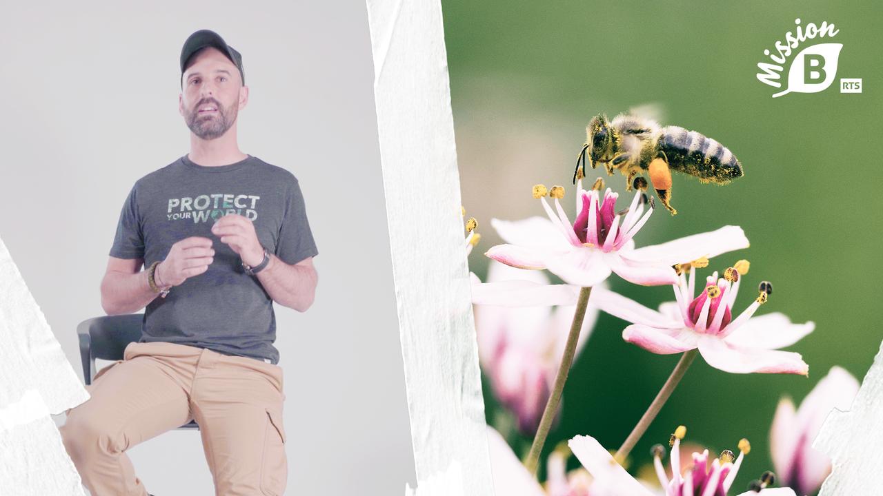 Avec Mission B, redonnons de la place à la biodiversité en Suisse [Sacha Roth - RTS]