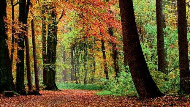 La forêt suisse et le bois [Office fédéral de l'environnement OFEV - Office fédéral des constructions et de la logistique]