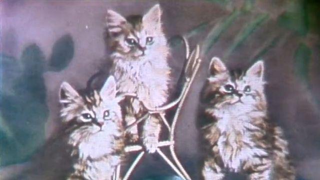 Le musée du chat à Riehen en 1983. [RTS]