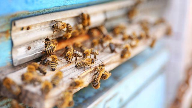 Les insectes sont-ils sensibles aux ondes électromagnétiques? [belchonock - Depositphotos]