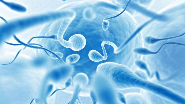 Pour atteindre l'ovule et le féconder, les spermatozoïdes doivent surmonter de très nombreuses difficultés.  resnick_joshua1 Depositphotos [resnick_joshua1 - Depositphotos]