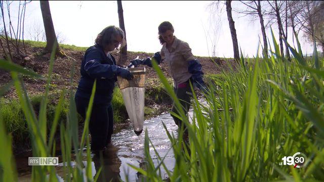 Les ruisseaux suisses sont toujours trop pollués par des pesticides. [RTS]