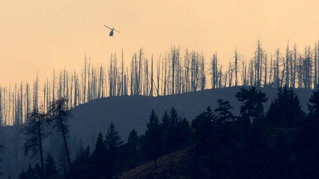 Une forêt brûlée sur le mont McLean au Canada. [The Canadian Press, Darryl Dyck/ AP Photo - Keystone]
