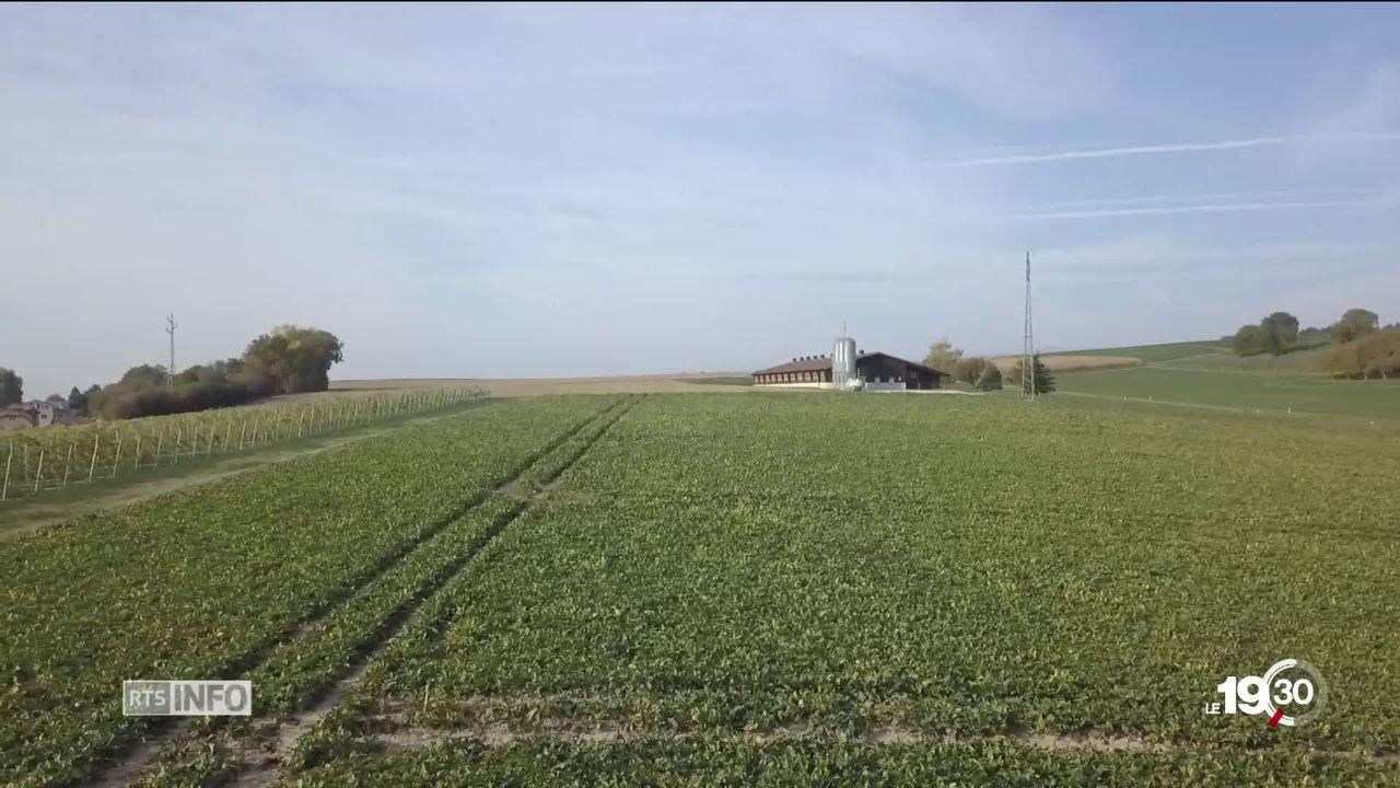 Plus de 90% des champs biologiques du Plateau suisse sont contaminés par des pesticides, strictement interdits dans le bio [RTS]