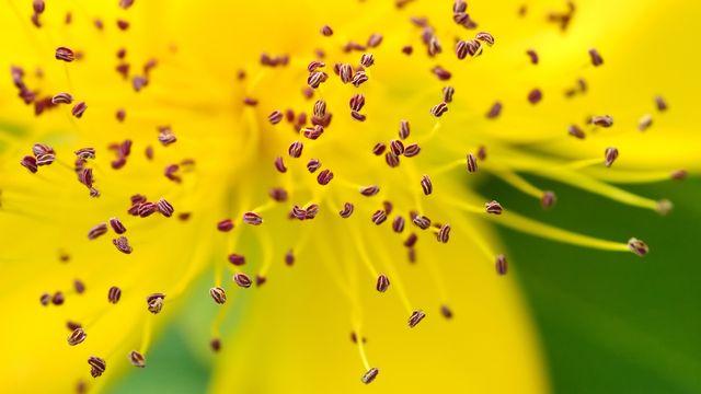 Les fleurs ne peuvent pas se déplacer pour se reproduire. nelsonart Depositphotos [nelsonart - Depositphotos]