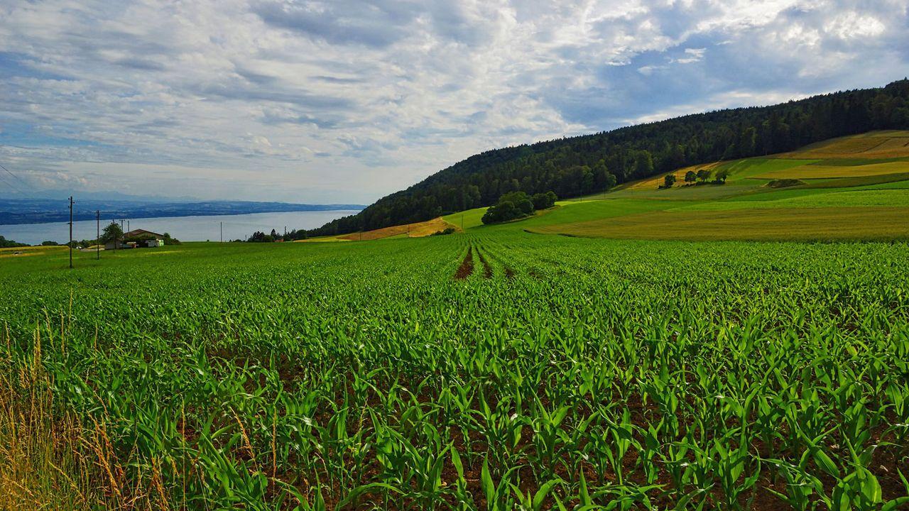 Enges se situe en hauteur, entre les lacs de Neuchâatel et de Bienne. [Lyonel Kaufmann - CC BY-NC-ND 2.0]