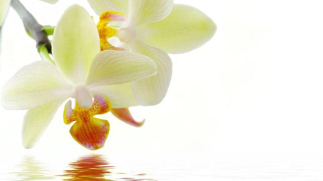 Les orchidées sont les championnes des stratégies de pollinisation. dolnikov Depositphotos [dolnikov - Depositphotos]