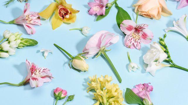 Les fleurs ne livrent pas tous leurs secrets de reproduction. K.Klimenko Depositphotos [K.Klimenko - Depositphotos]