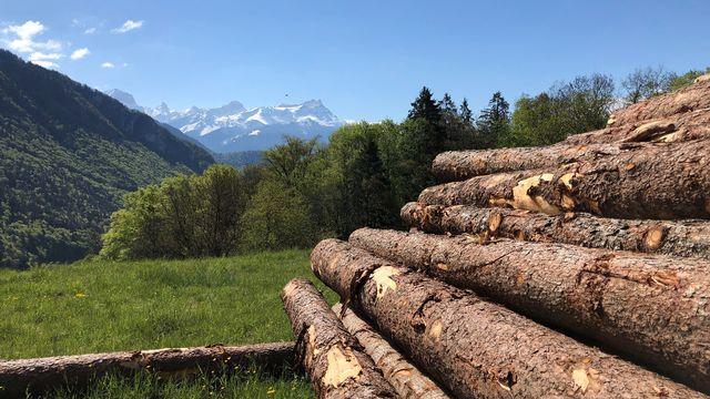 Un tiers du territoire suisse est recouvert de forêts. [Jordan Davis - RTS]