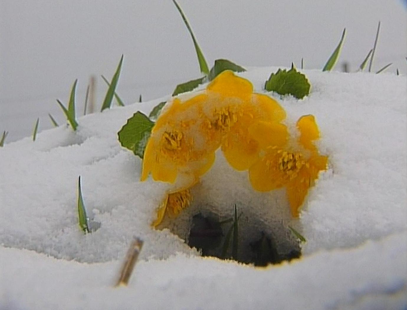Il neige au Moléson