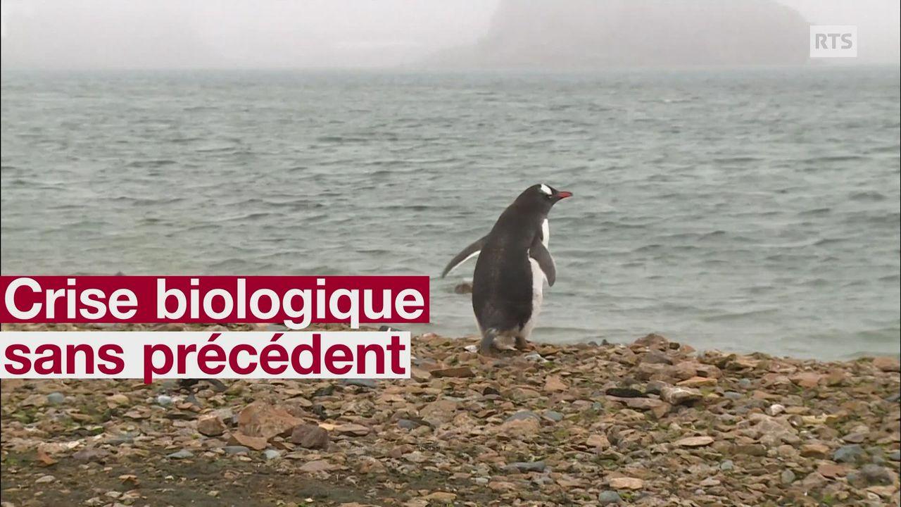 Crise biologique sans precedent [RTS]