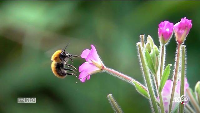 Rapport sur la biodiversité: 1 espèce sur 8 menacée d'extinction à cause de l'Homme dans les prochaines décennies. [RTS]