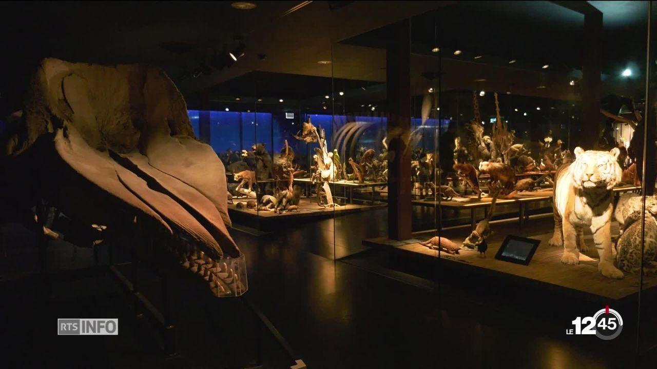 Les Fribourgeois découvrent les contours de leur futur Musée d'histoire naturelle. [RTS]